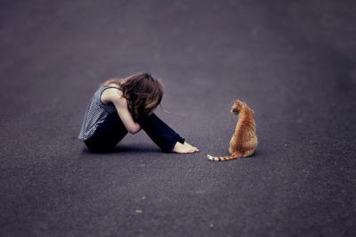 Saat keluarga melarang untuk memelihara kucing. Apa yang sebaiknya anda lakukan ?.