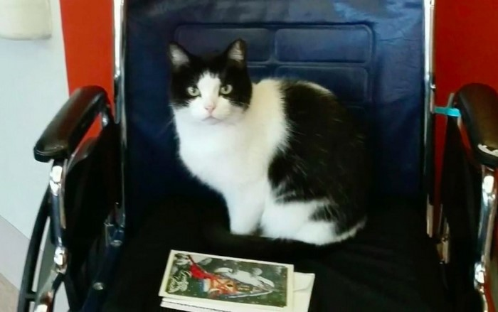 ore4 - Sempat Hidup Liar, Kucing ini Menyelinap Masuk Panti Jompo dan Diangkat sebagai Resepsionis