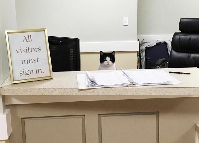 Oreo, kucing jalanan yang menyelinap masuk panti jompo dan bekerja sebagai resepsionis.