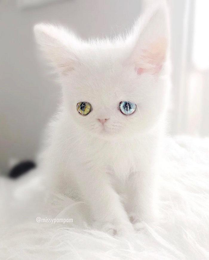 Pam-pam memiliki kelainan Heterochromia Iridium.