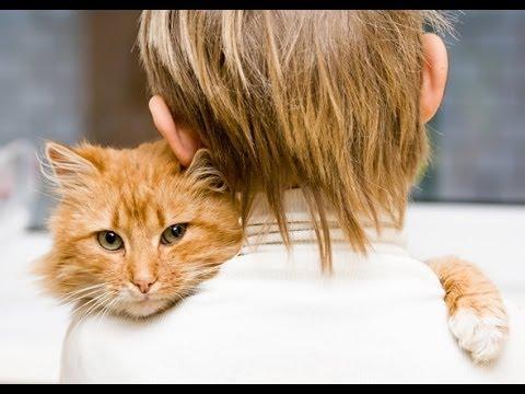 Apa yang harus dilakukan saat keluarga melarang memelihara kucing ?.
