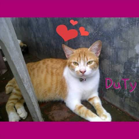 Dety, salah seekor kucing yang mati karena keracunan.