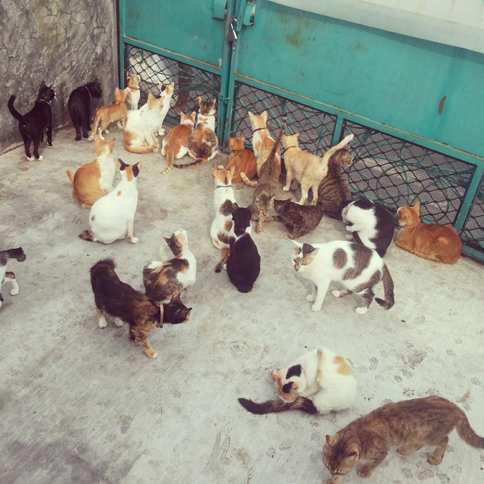 Kejam ! 30 Ekor kucing Rucing Bu Agung mati diracun.