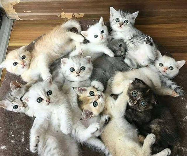 14574258 1129218887165844 1652143403305009152 n - Alasan Kenapa kamu Harus Punya Kucing Lebih dari Satu
