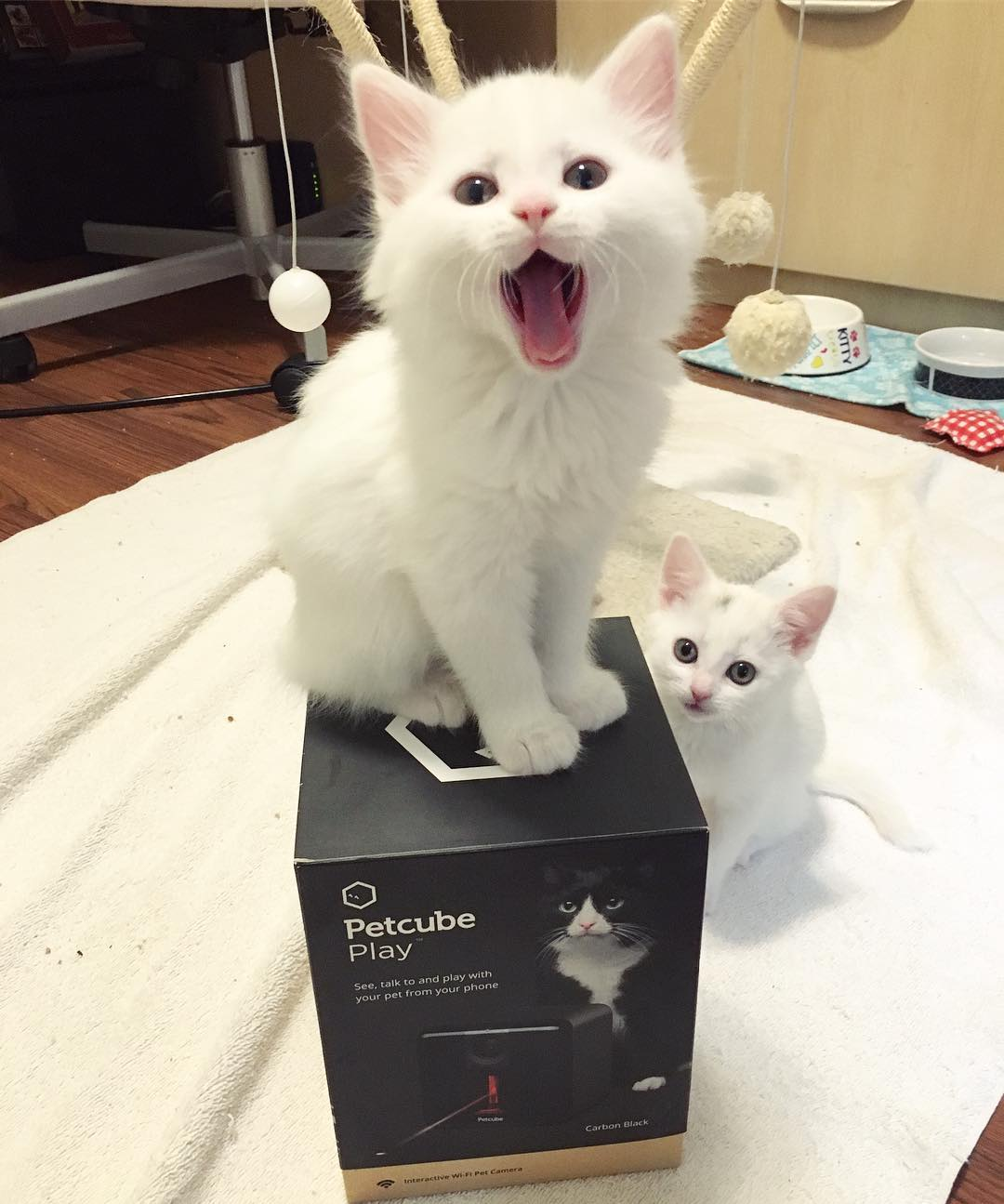 16906587 270207283408338 4034068962143633408 n - Alasan Kenapa kamu Harus Punya Kucing Lebih dari Satu