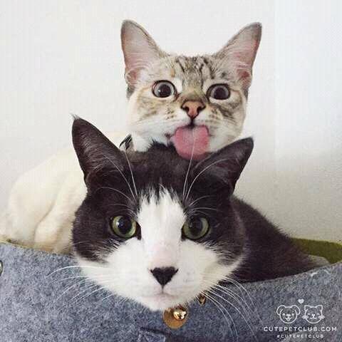 FB IMG 14549532437381719 - Alasan Kenapa kamu Harus Punya Kucing Lebih dari Satu