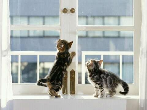 FB IMG 14554964134346596 - Alasan Kenapa kamu Harus Punya Kucing Lebih dari Satu