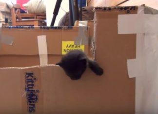 aku si kucing liar - Aku Si Kucing Liar