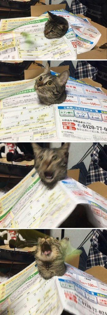 drama cat 349x1024 - 10 Foto ini Tunjukan Kalau Kucing Pantas Dijuluki Sang 'Drama Queen'