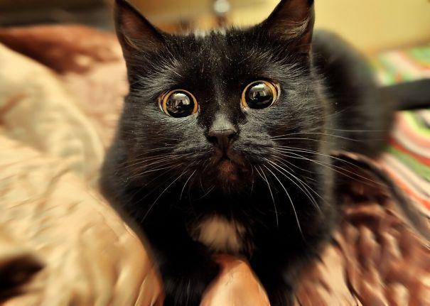 drama catw - 10 Foto ini Tunjukan Kalau Kucing Pantas Dijuluki Sang 'Drama Queen'