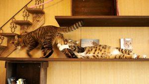 drama6 300x169 - 10 Foto ini Tunjukan Kalau Kucing Pantas Dijuluki Sang 'Drama Queen'
