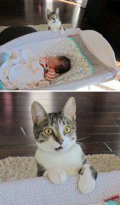 drama9 176x300 - 10 Foto ini Tunjukan Kalau Kucing Pantas Dijuluki Sang 'Drama Queen'