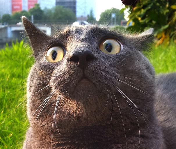 Kucing memang pantas dijuluki sang Drama queen.Kucing memang pantas dijuluki sang Drama queen.