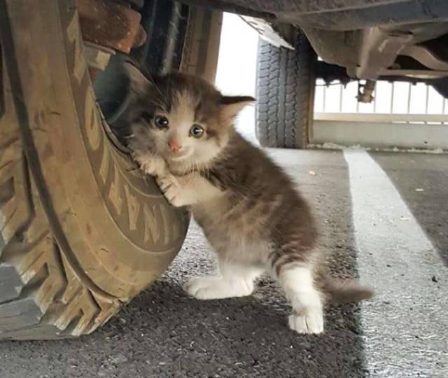 Download 67+  Gambar Kucing Liar Lucu Paling Bagus