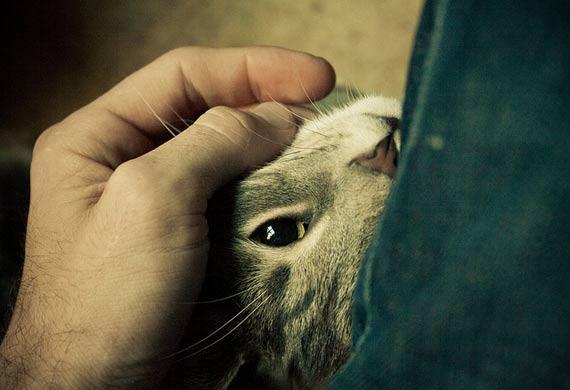 kesepian - Alasan Kenapa kamu Harus Punya Kucing Lebih dari Satu