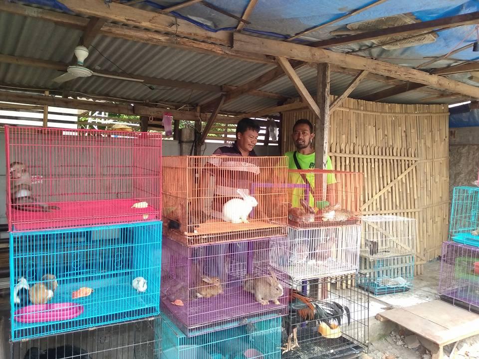 Klarifikasi kucing terlantar di tempat penjualan binatang Bekasi.