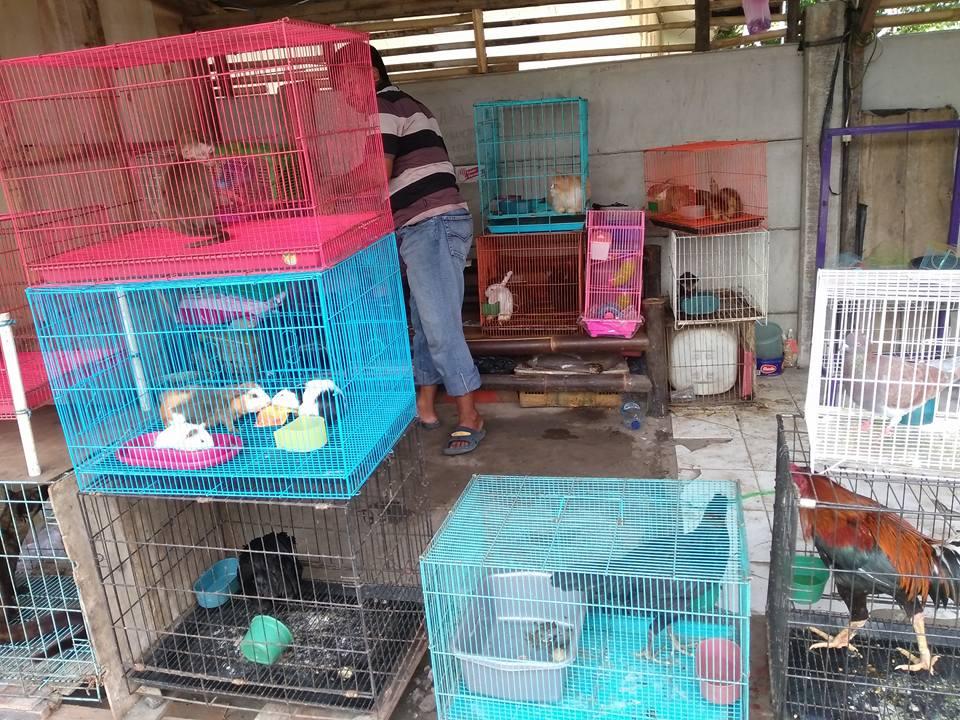 Abah Juna dan rombongan rescuer saat mengunjungi tempat kucing terlantar di Bekasi. Terlihat tidak hanya kucing, ada juga beberapa hewan lain.