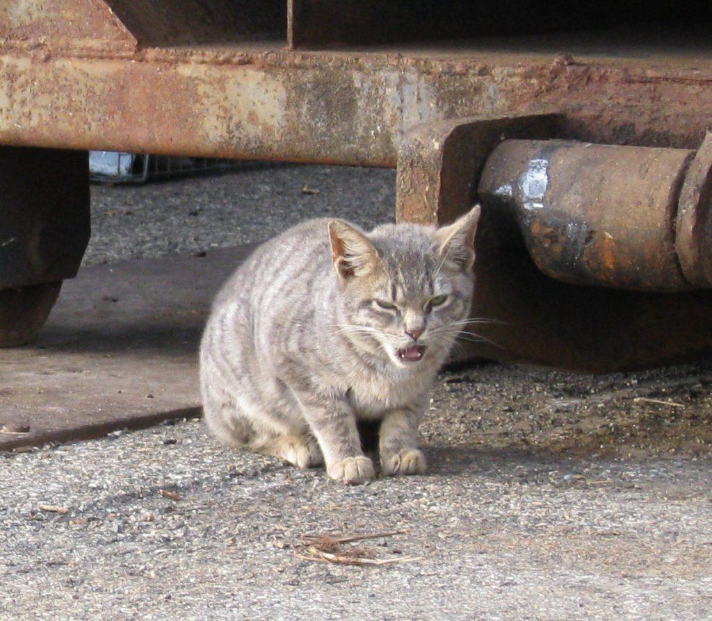 kucingliar2 1 1024x894 - Aku Si Kucing Liar