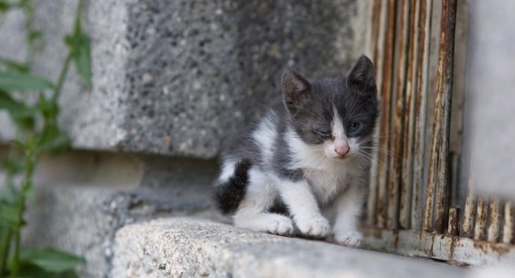 kucingliar6 - Aku Si Kucing Liar
