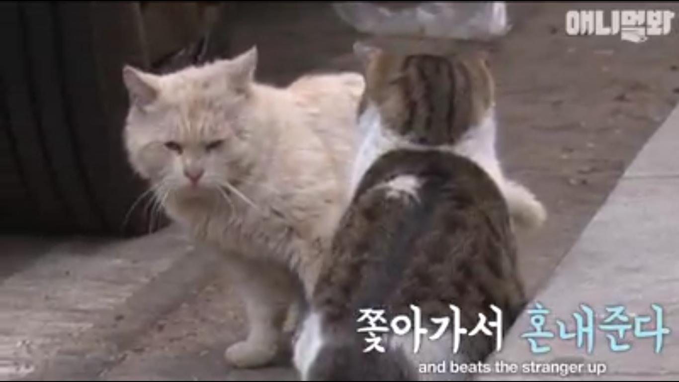 menjagasahabat - Mengharukan, Kucing ini Setia Menjaga Sahabatnya yang Cacat