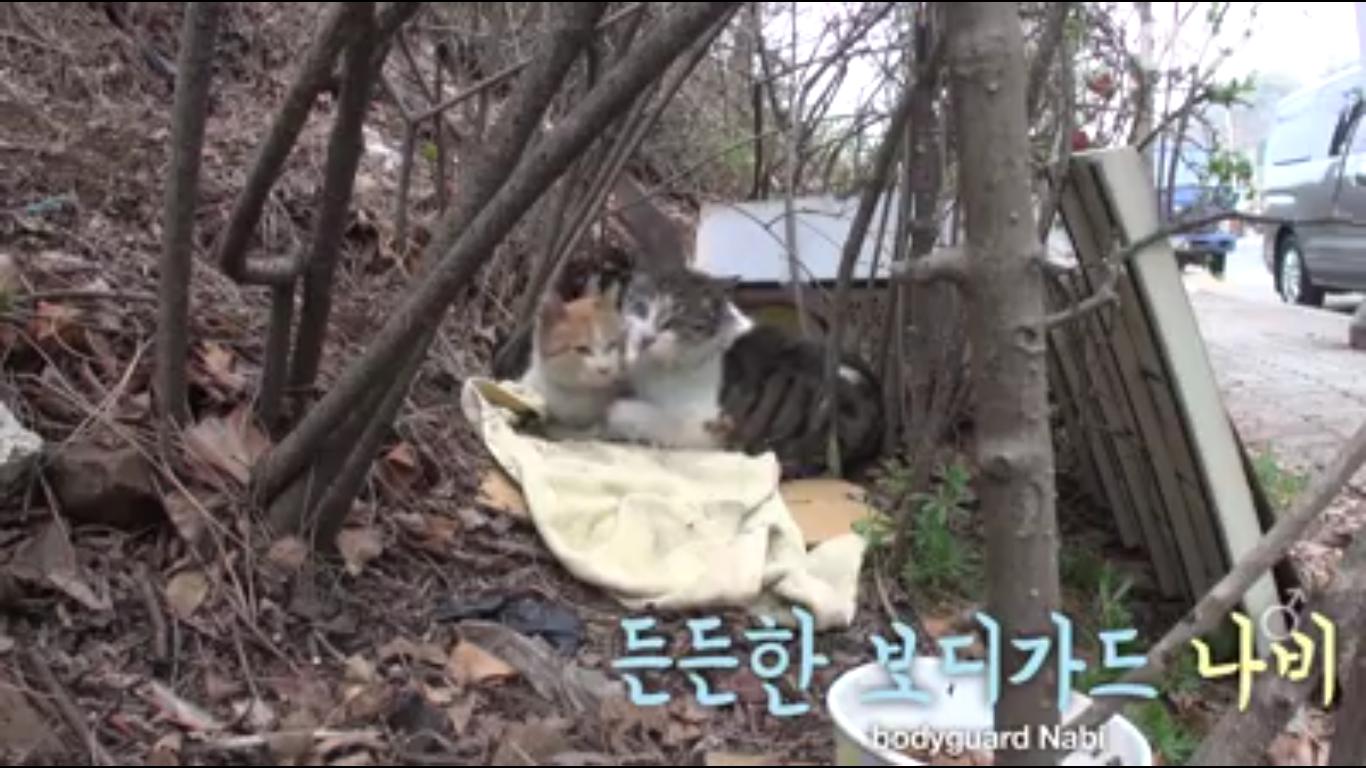 Kucing ini setia menjaga sahabatnya yang cacat.