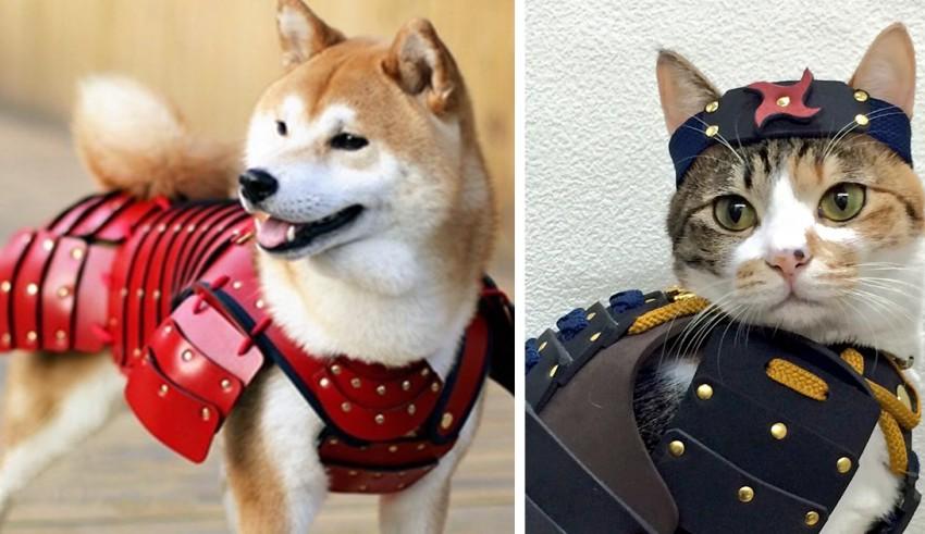 armor warrior dari samurai age2.jpg - Keren ! Perusahaan di Jepang ini Membuat Armor Samurai untuk Kucing dan Anjing