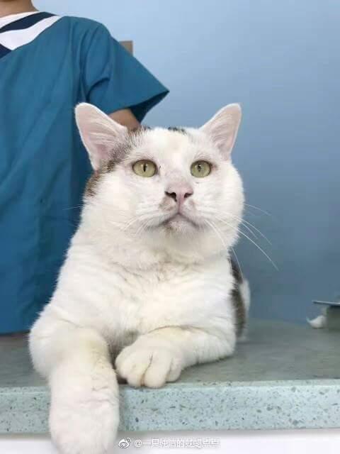 Feifei, kucing liar yang jadi terkenal setelah jalani operasi plastik.