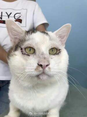 feifei4 - Kucing Liar ini jadi Terkenal Setelah Jalani Operasi Kelopak Mata