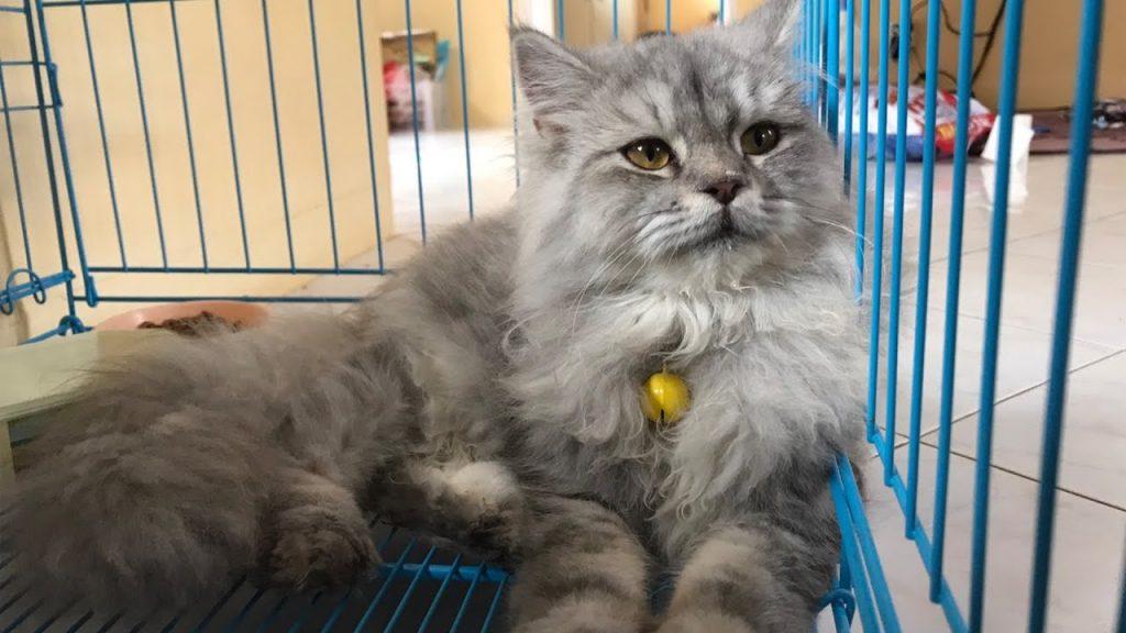 Karantina kucing.