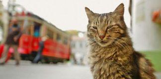 Review film Kedi.