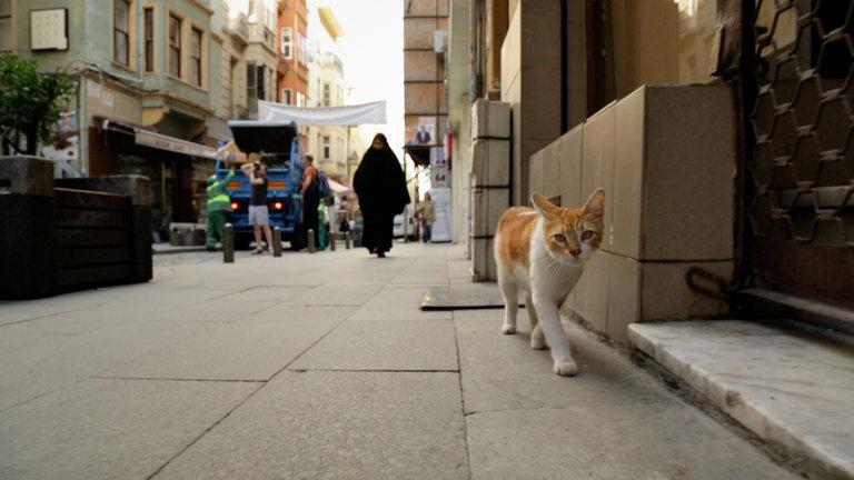 kedi2 - Review : Kedi, Melihat Lebih Dekat Kehidupan Kucing Jalanan Di Istanbul dari sebuah Film