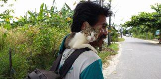 Kemanapun pergi, Si Kucing selalu setia bersama pak Ijal.