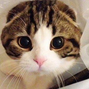 14600897 1363473793693559 6223267597945433336 n 300x300 - Cuma Pemilik Kucing yang Tahu Rasanya 16 Hal Berikut
