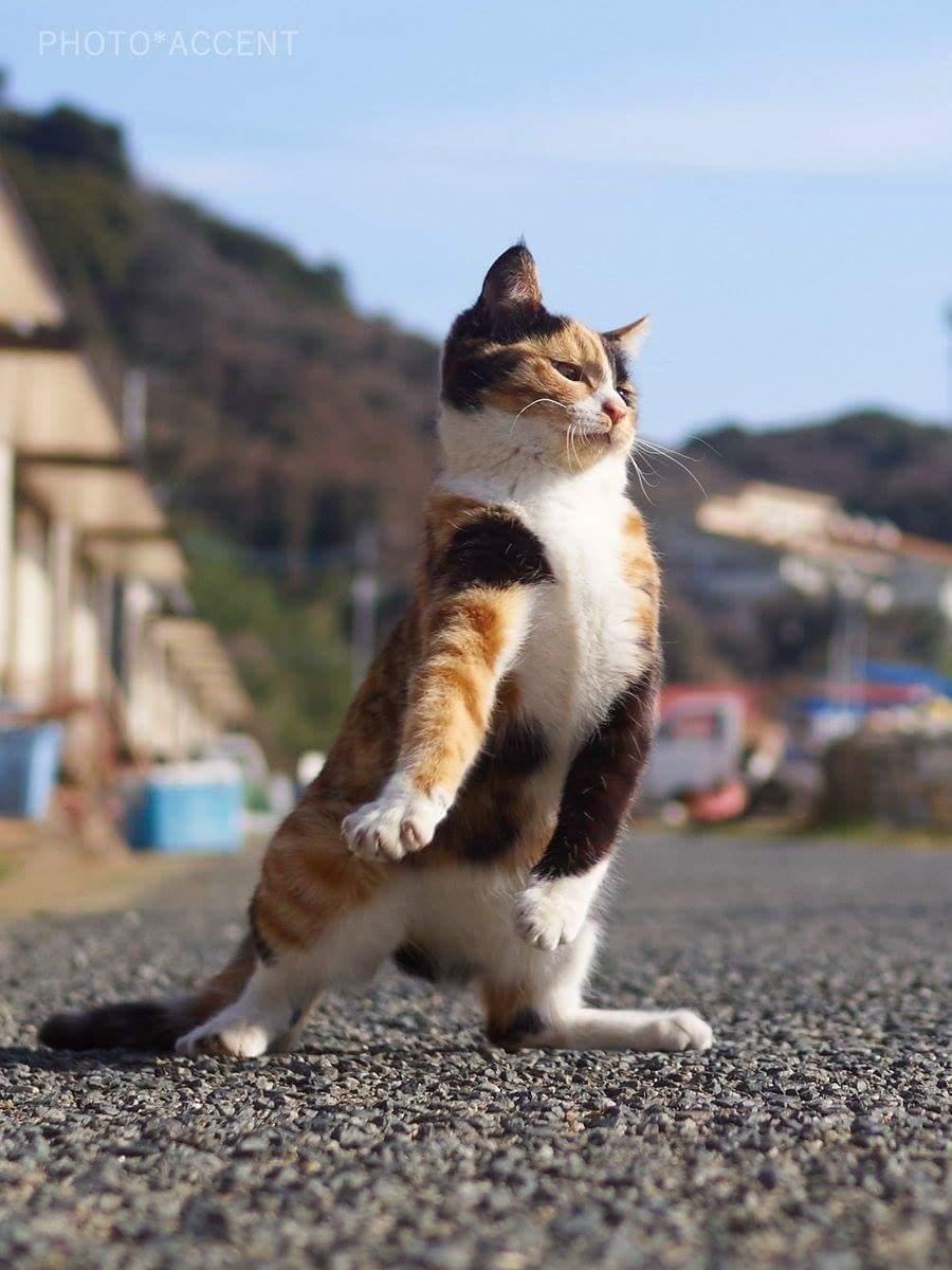 Kucing Kucing Ini Lupa Caranya Jadi Kucing Bikin Ngakak