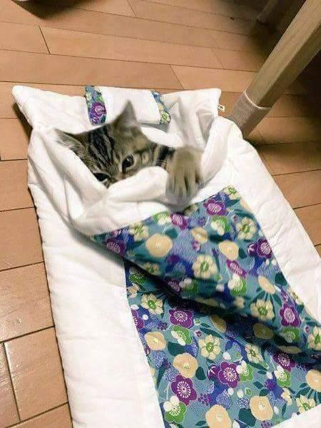 18581753 1729216350426998 7309908550237739583 n - Flu Kucing dan Cara Mengobatinya. Kamu Perlu Tahu !