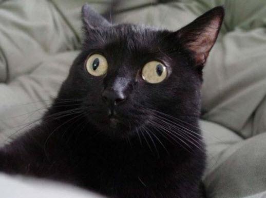 bakekok - Kucing-Kucing ini Lupa Caranya Jadi Kucing. Bikin Ngakak !
