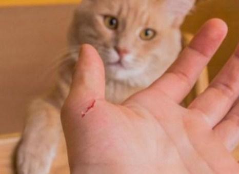 cakar - Cuma Pemilik Kucing yang Tahu Rasanya 16 Hal Berikut