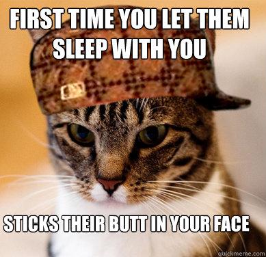 dipantatin kucing - Cuma Pemilik Kucing yang Tahu Rasanya 16 Hal Berikut