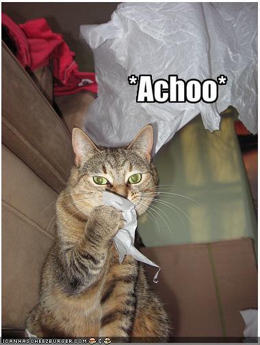 flu kucing 2 - Flu Kucing dan Cara Mengobatinya. Kamu Perlu Tahu !