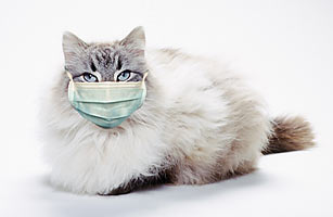 flu kucing - Flu Kucing dan Cara Mengobatinya. Kamu Perlu Tahu !