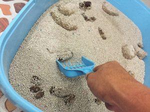 kembang pasir 300x225 - Cuma Pemilik Kucing yang Tahu Rasanya 16 Hal Berikut