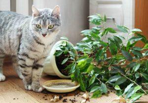 kitty nakal 300x208 - Cuma Pemilik Kucing yang Tahu Rasanya 16 Hal Berikut