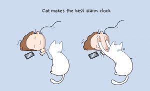kucing alrm 300x183 - Cuma Pemilik Kucing yang Tahu Rasanya 16 Hal Berikut