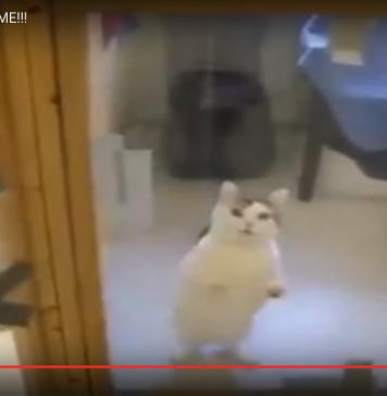 Video : Kucing ini punya cara pintar agar cepat diadopsi.