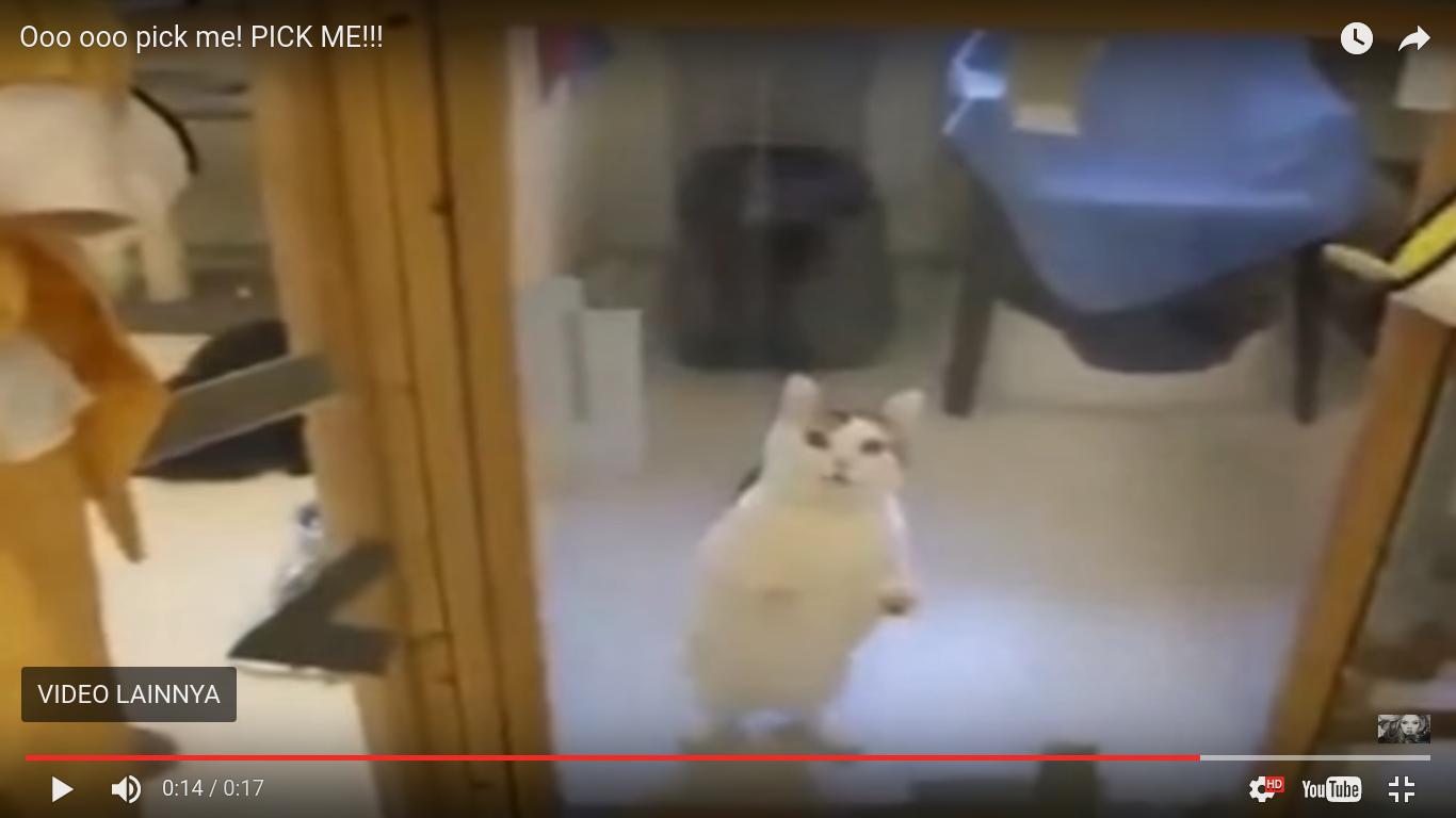 kucing ini punya cara pintar agar cepat diadopsi - Kucing ini Punya Cara Pintar agar Cepat Diadopsi