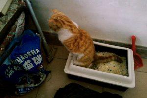 kucing poop 300x200 - Cuma Pemilik Kucing yang Tahu Rasanya 16 Hal Berikut