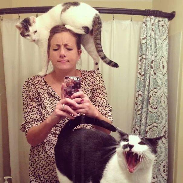 ogah selfi6 - Lihat Aksi Konyol 12 Kucing ini Saat Diajak Selfie. Mukanya Ngeselin Banget
