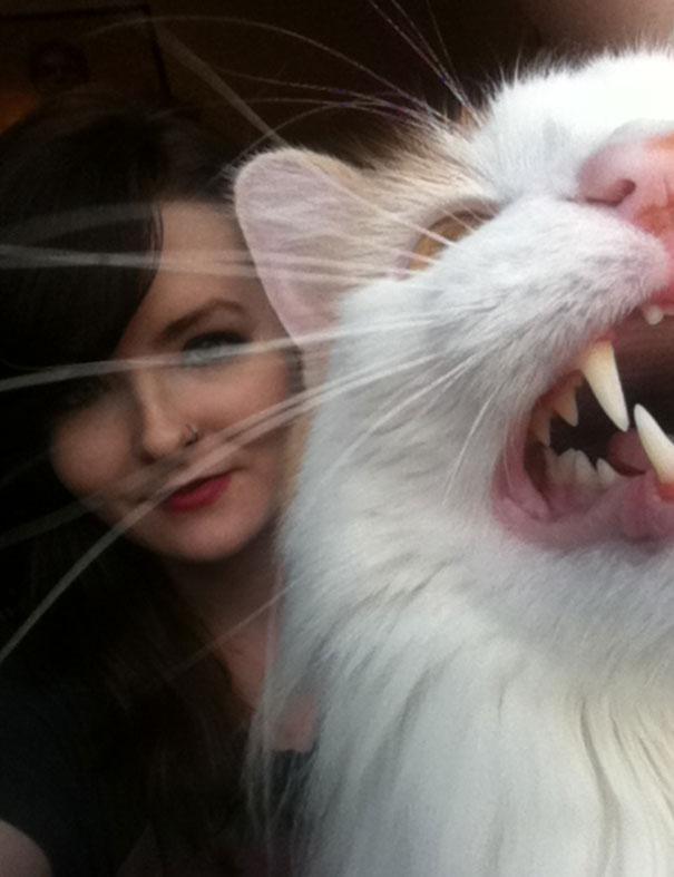 ogah selfi7 - Lihat Aksi Konyol 12 Kucing ini Saat Diajak Selfie. Mukanya Ngeselin Banget