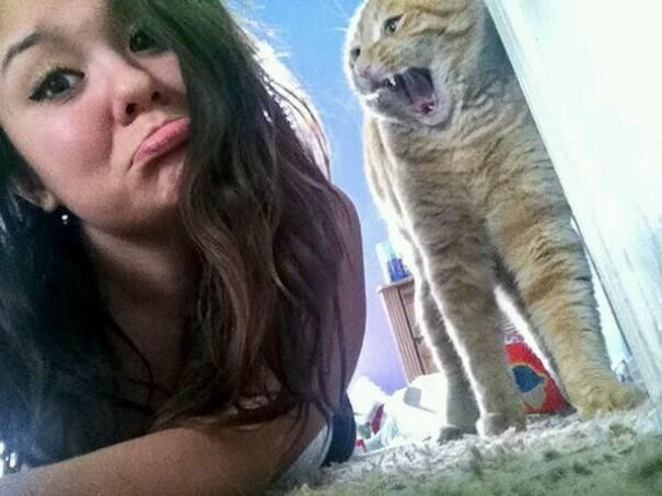 ogah selfii - Lihat Aksi Konyol 12 Kucing ini Saat Diajak Selfie. Mukanya Ngeselin Banget
