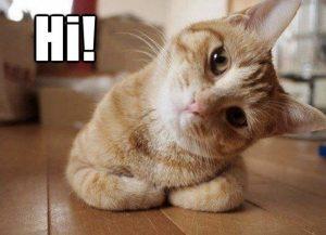 say hi 300x217 - Cuma Pemilik Kucing yang Tahu Rasanya 16 Hal Berikut